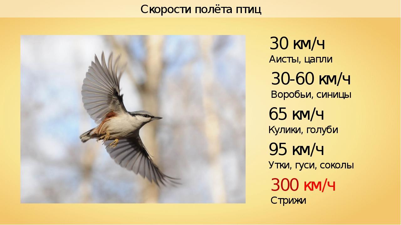 Скорости полёта птиц 300 км/ч Стрижи 30-60 км/ч Воробьи, синицы 30 км/ч Аисты...