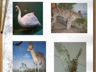 Редкие исчезающие виды животных