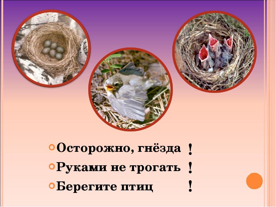 Осторожно, гнёзда Руками не трогать Берегите птиц ! ! !