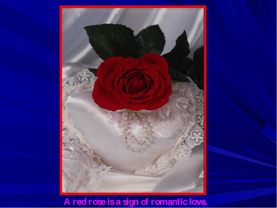 A red rose is a sign of romantic love.