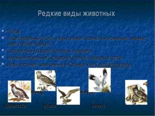 Редкие виды животных Птицы: соколообразные (скопа, лунь полевой, осоед обыкно
