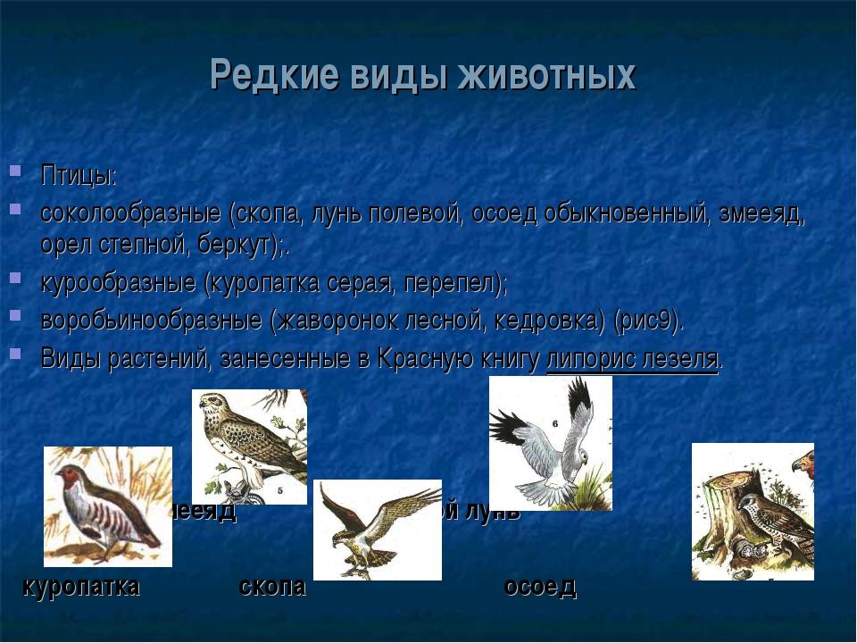 Редкие виды животных Птицы: соколообразные (скопа, лунь полевой, осоед обыкно...