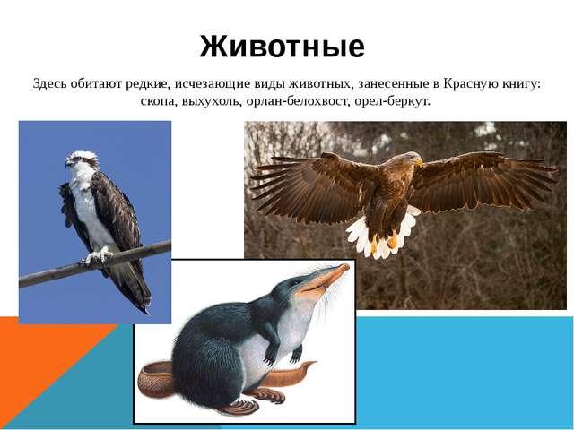 Здесь обитают редкие, исчезающие виды животных, занесенные в Красную книгу: с...