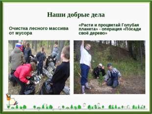 Наши добрые дела Очистка лесного массива от мусора «Расти и процветай Голубая