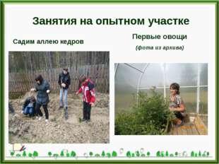 Занятия на опытном участке Садим аллею кедров Первые овощи (фота из архива)