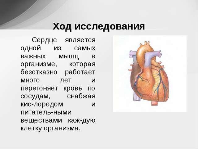 Сердце является одной из самых важных мышц в организме, которая безотказно р...