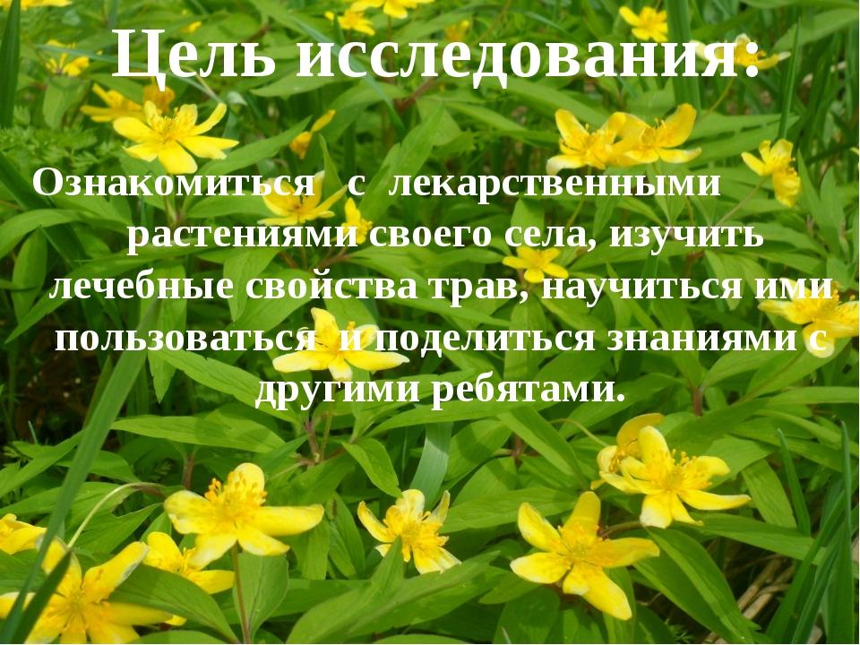 * * Цель исследования: Ознакомиться с лекарственными растениями своего села,...