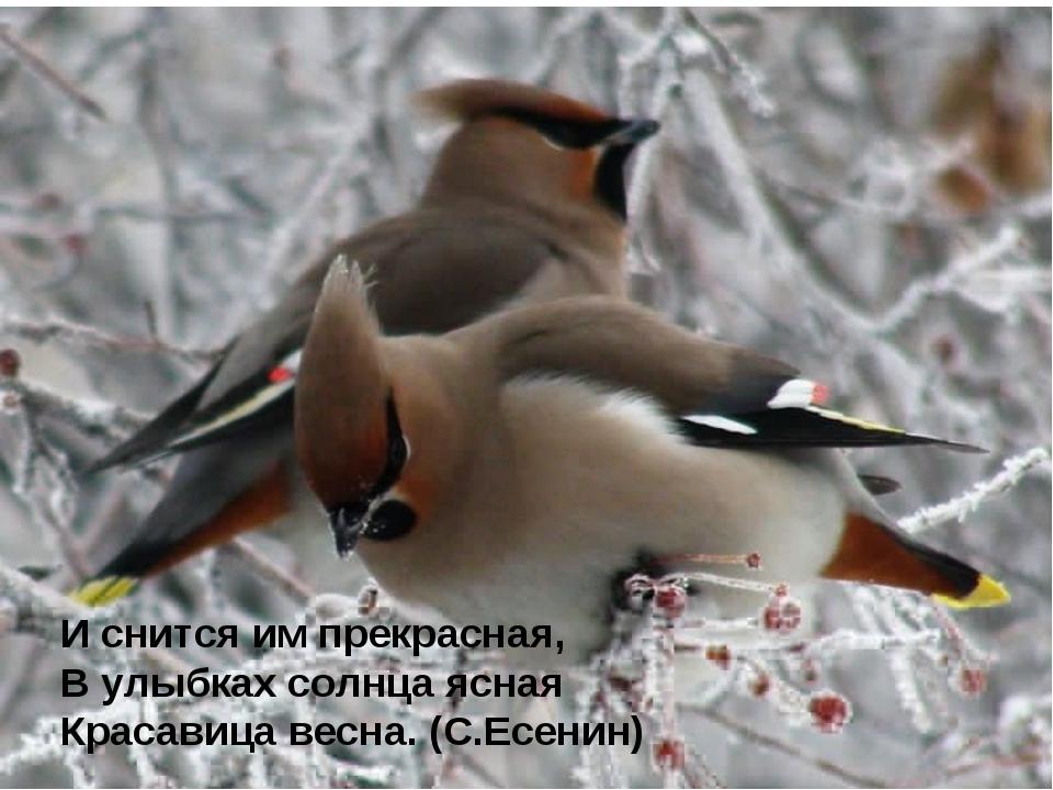 И снится им прекрасная, В улыбках солнца ясная Красавица весна. (С.Есенин)