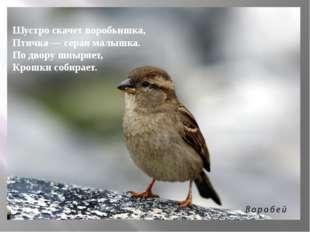 Шустро скачет воробьишка, Птичка — серая малышка. По двору шныряет, Крошки с