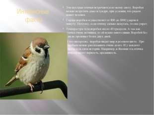 Интересные факты Эти шустрые птички встречаются по всему свету. Воробья можно