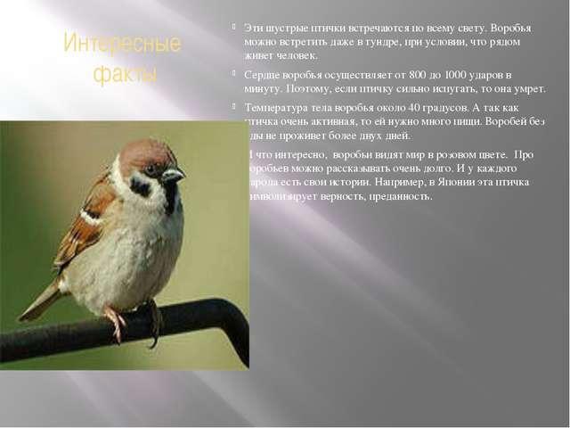 Интересные факты Эти шустрые птички встречаются по всему свету. Воробья можно...