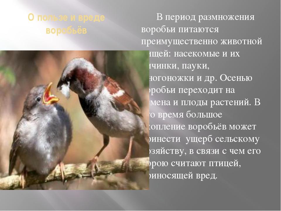 О пользе и вреде воробьёв В период размножения воробьи питаются преимуществен...
