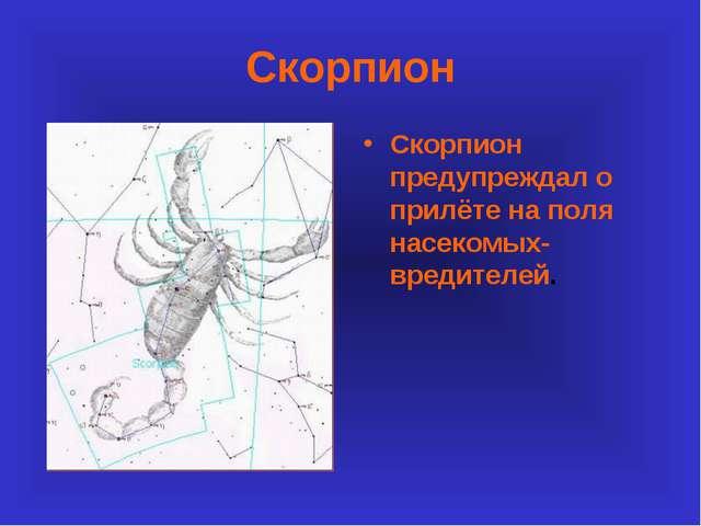 Скорпион Скорпион предупреждал о прилёте на поля насекомых-вредителей.