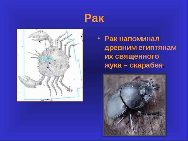 Рак Рак напоминал древним египтянам их священного жука – скарабея.