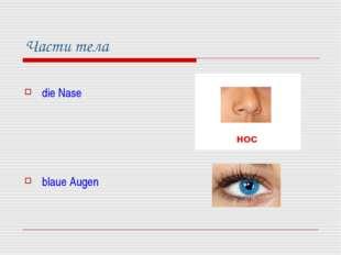 Части тела die Nase blaue Augen