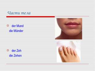 Части тела der Mund die Münder der Zeh die Zehen