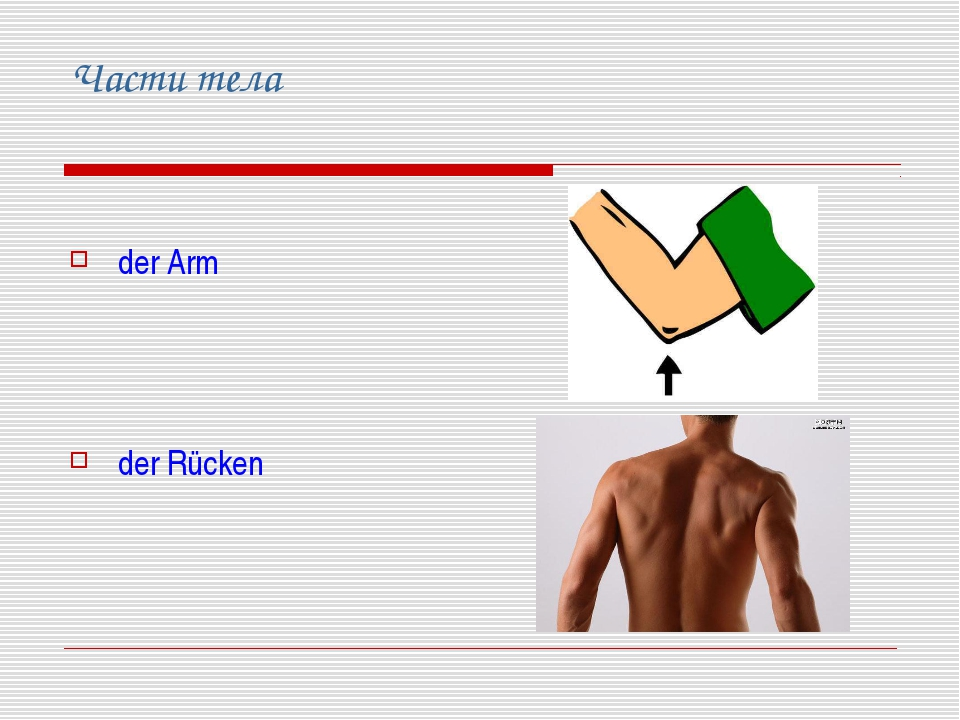 Части тела der Arm der Rücken