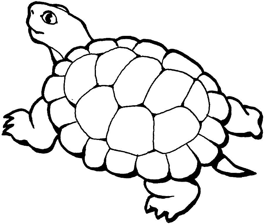 D:\школа\картинки- раскраски\turtle2.jpg