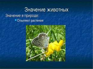 Значение животных Значение в природе: Опыляют растения