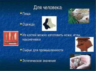 Для человека: Пища Одежда Из костей можно изготовить ножи, иглы, наконечники