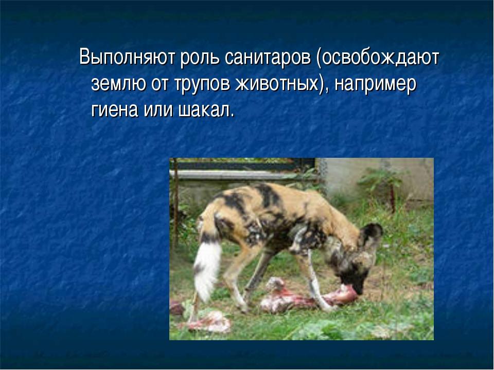 Выполняют роль санитаров (освобождают землю от трупов животных), например ги...