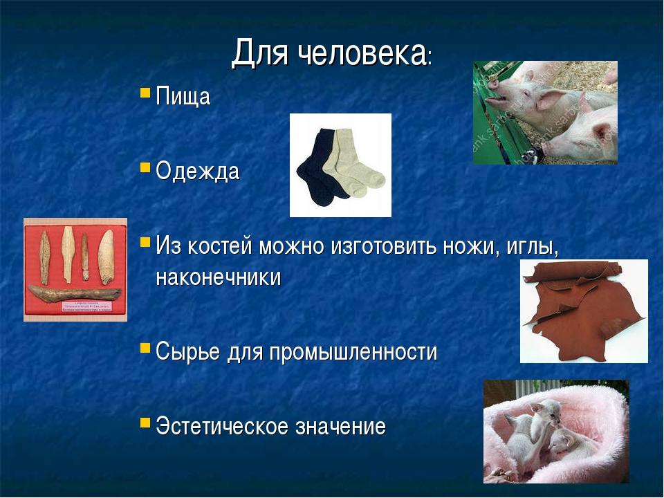 Для человека: Пища Одежда Из костей можно изготовить ножи, иглы, наконечники...