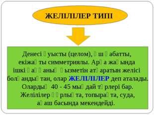 ЖЕЛІЛІЛЕР ТИПІ Денесі қуысты (целом), үш қабатты, екіжақты симметриялы. Арқа