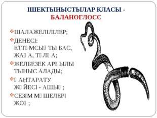 ІШЕКТЫНЫСТЫЛАР КЛАСЫ - БАЛАНОГЛОСС ШАЛАЖЕЛІЛІЛЕР; ДЕНЕСІ: ЕТТҰМСЫҚТЫ БАС, ЖАҒ