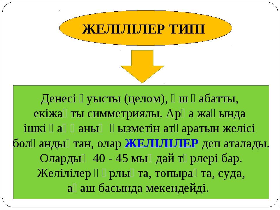 ЖЕЛІЛІЛЕР ТИПІ Денесі қуысты (целом), үш қабатты, екіжақты симметриялы. Арқа...