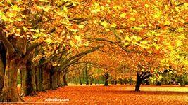 золотая осень Осень Природа золотая времена года 1920 x 1200 BLACKWOLFIK 56