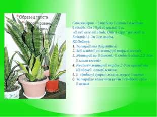 Сансевиерия – өте баяу өсетін ғажайып өсімдік. Ол құрғақшылыққа, көлеңкеге тө
