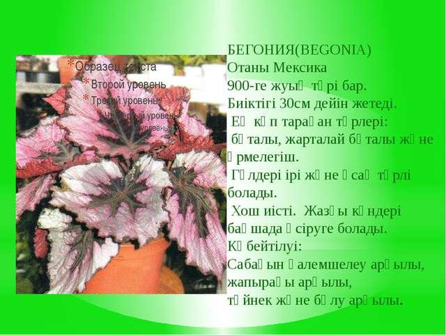 БЕГОНИЯ(BEGONIA) Отаны Мексика 900-ге жуық түрі бар. Биіктігі 30см дейін жете...