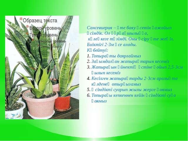 Сансевиерия – өте баяу өсетін ғажайып өсімдік. Ол құрғақшылыққа, көлеңкеге тө...