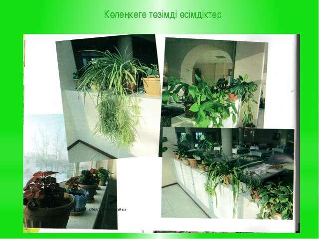 Көлеңкеге төзімді өсімдіктер