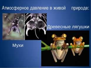 Атмосферное давление в живой природе: Мухи Древесные лягушки