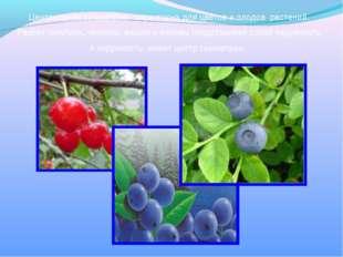 Центральная симметрия характерна для цветов и плодов растений. Разрез голубик