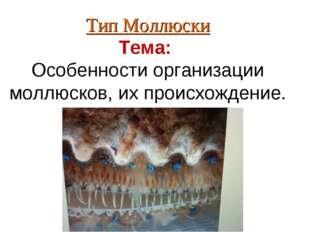 Тип Моллюски Тема: Особенности организации моллюсков, их происхождение.