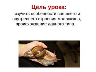 Цель урока: изучить особенности внешнего и внутреннего строения моллюсков, пр