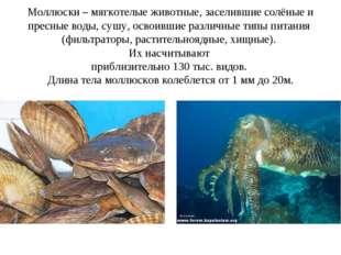 Моллюски – мягкотелые животные, заселившие солёные и пресные воды, сушу, осво