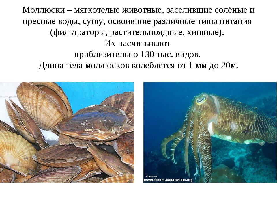 Моллюски – мягкотелые животные, заселившие солёные и пресные воды, сушу, осво...