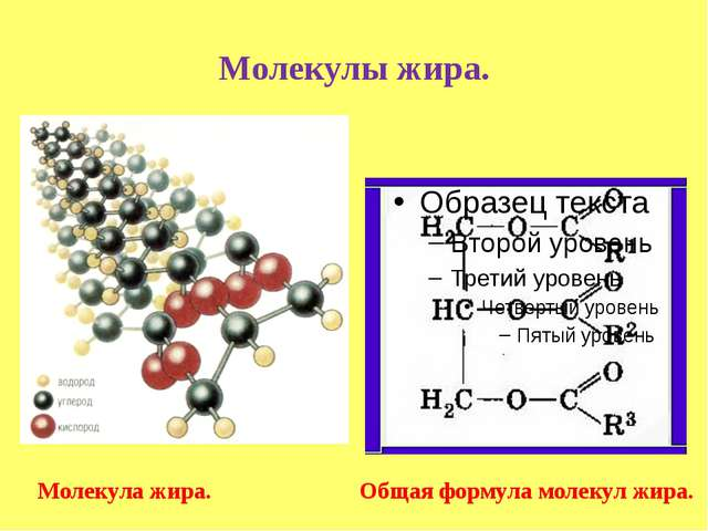 Молекулы жира. Молекула жира. Общая формула молекул жира.