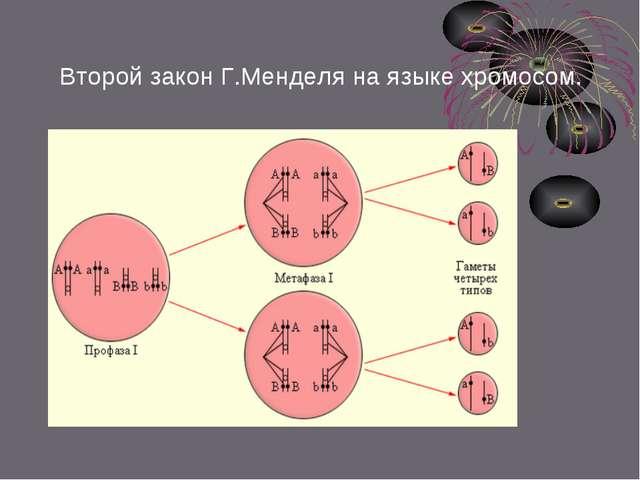 Второй закон Г.Менделя на языке хромосом.