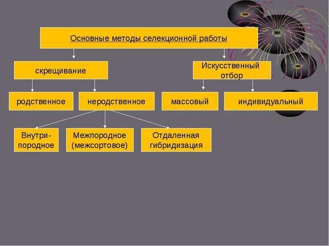 Основные методы селекционной работы скрещивание Искусственный отбор родственн...