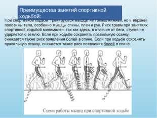 При спортивной ходьбе тренируются мышцы не только нижней, но и верхней полов