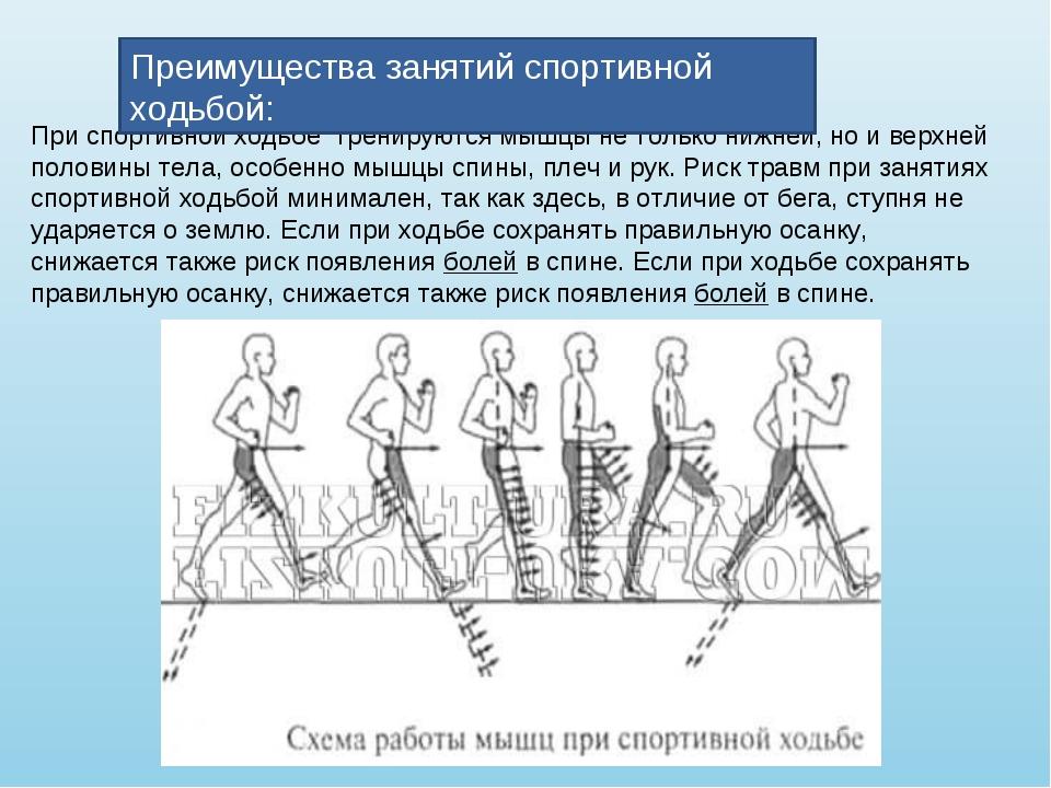 При спортивной ходьбе тренируются мышцы не только нижней, но и верхней полов...