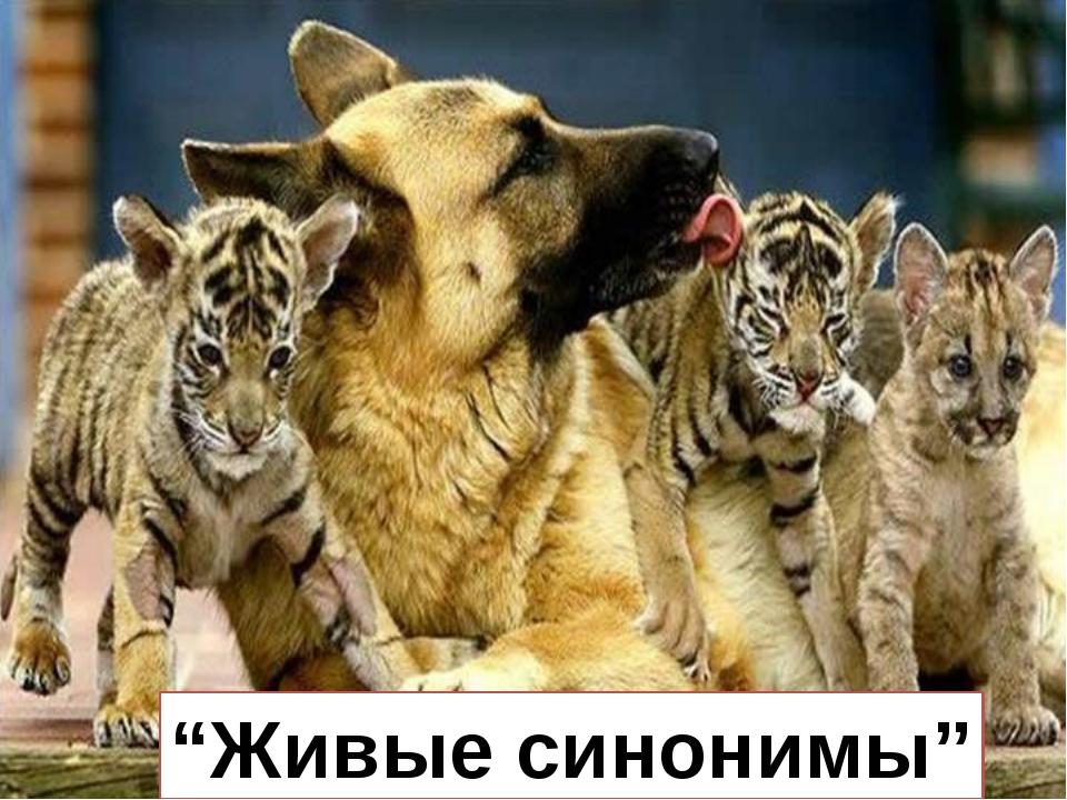 """""""Живые синонимы"""""""