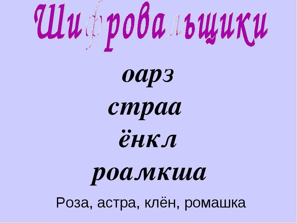 оарз страа ёнкл роамкша Роза, астра, клён, ромашка
