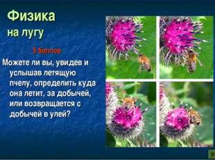 Физика на лугу Можете ли вы, увидев и услышав летящую пчелу, определить куда