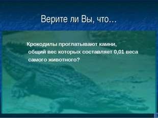 Верите ли Вы, что… Крокодилы проглатывают камни, общий вес которых составляет