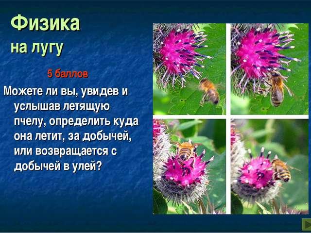 Физика на лугу Можете ли вы, увидев и услышав летящую пчелу, определить куда...